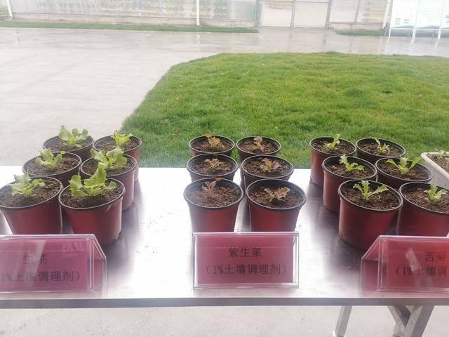 南京六合区竹镇餐厨垃圾研发处置中心正式交付使用,将对分类出的餐厨垃圾进行资源化处理